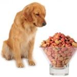 Kaip pasirinkti sausą šunų maistą